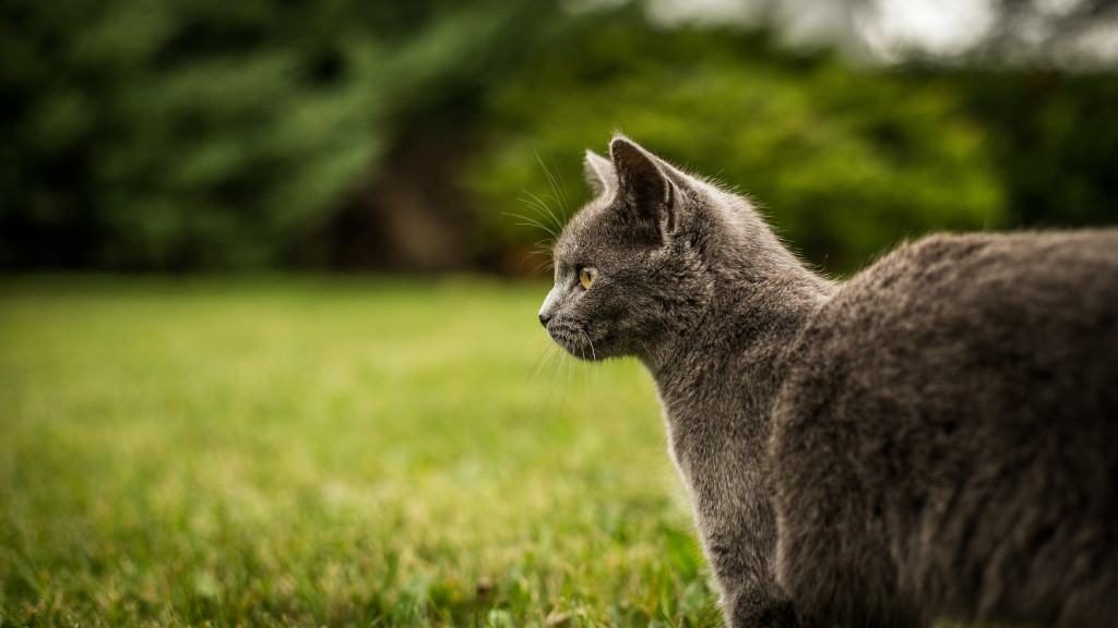 You do not have to go through the demanding and time-consuming stage of  raising a kitten. Adult cats get into less mischief, ...